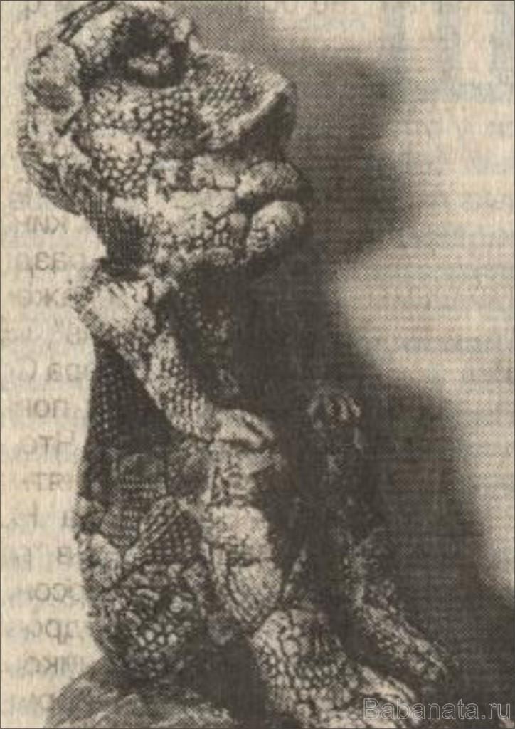 nikolaev v1