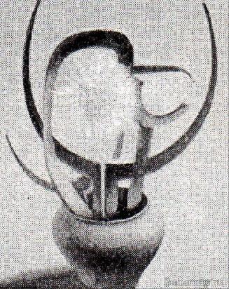 клевогин181